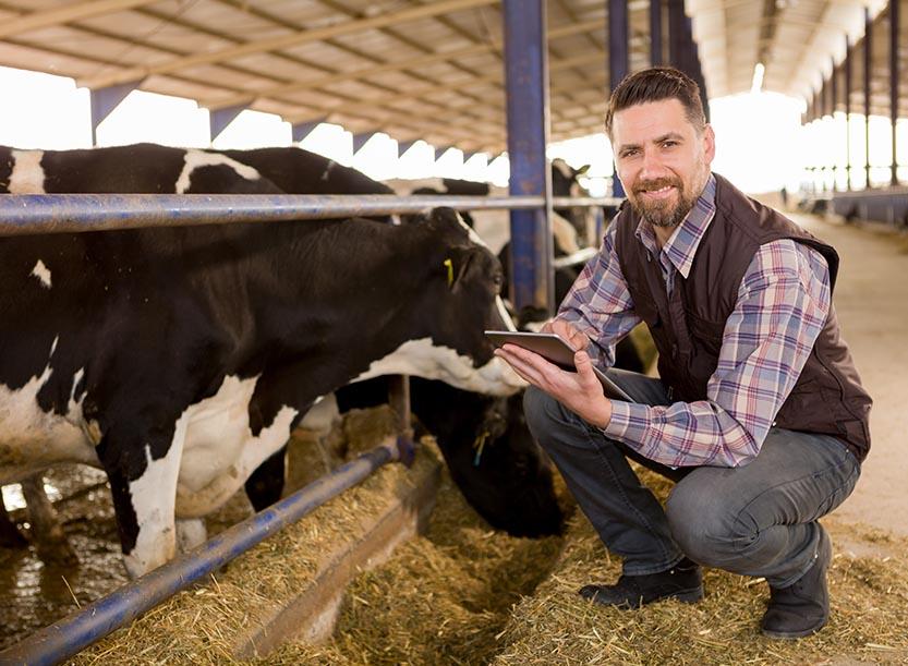 Nutztierfinanzierung Milchkuh finanzieren